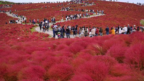 Turistas acuden en masa a Hitachinaka