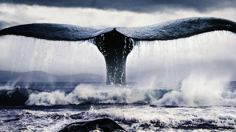 La maldición de Herman Melville: cómo 'Moby Dick' le hundió en vida