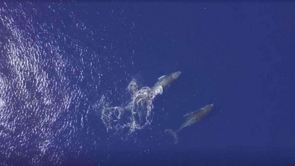 Japón vuelve a cazar ballenas pese a la oposición de organismos internacionales