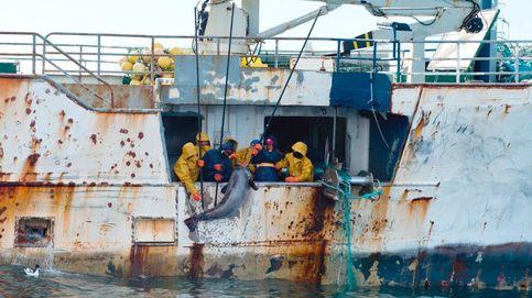 El Supremo deja impune la pesca pirata en alta mar: así burló el clan Vidal a  la justicia