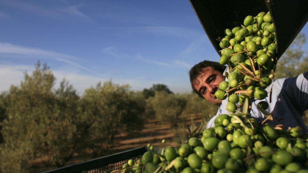 Agricultura ofrece Deoleo a socios españoles antes que tocar a la SEPI