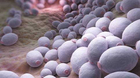 Los hongos son capaces de influir en tu salud digestiva, y mucho
