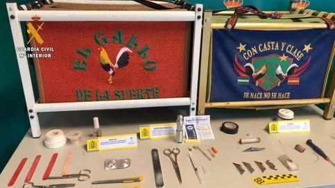 Tres detenidos y 37 investigados por celebrar peleas de gallos en Cáceres