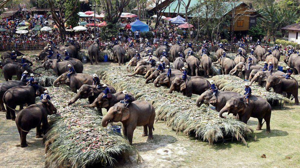 Foto: El día del Elefante en Tailandia, el 13 de junio. (Reuters)