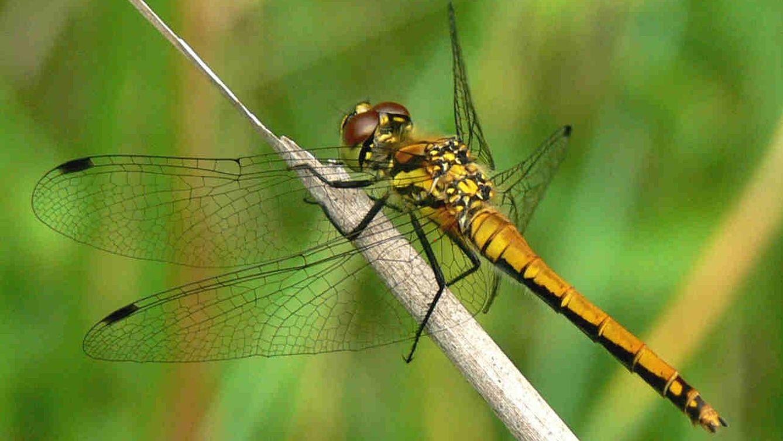 Animales moscas mosquitos abejas sabes de qu - Insectos en casa fotos ...
