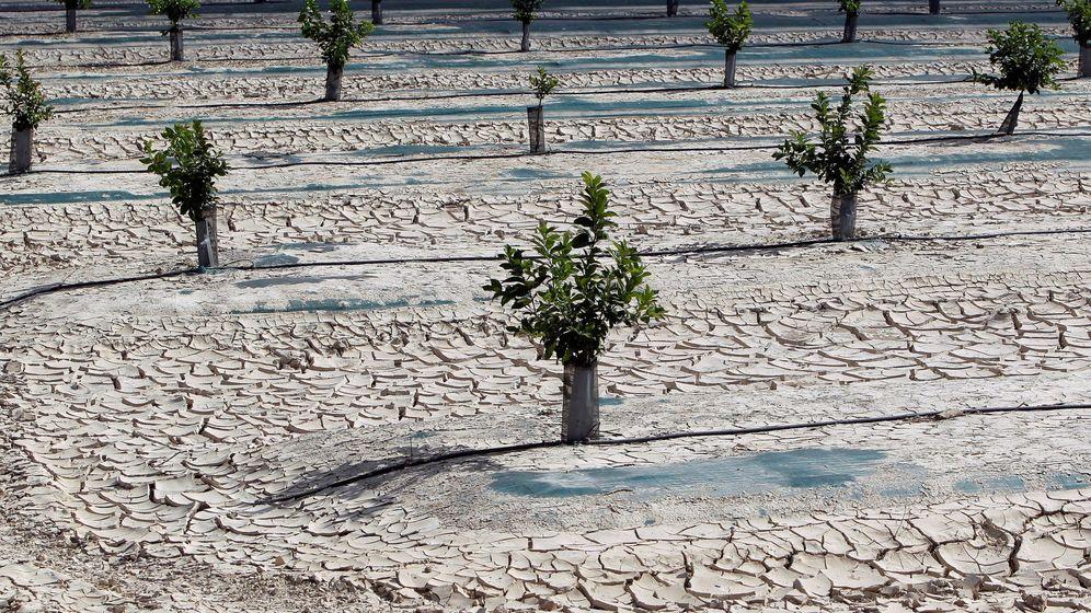Foto: Vista general de campos de una huerta afectados por la falta de precipitaciones (EFE)