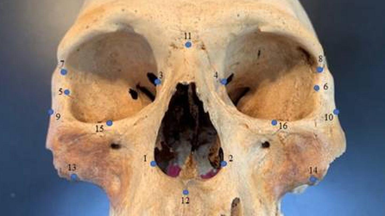 Uno de los cráneos de la investigación. Foto: Universidad Estatal de Carolina del Norte