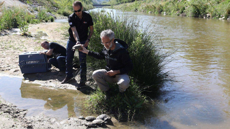 Labores de renaturalización en el río Manzanares.