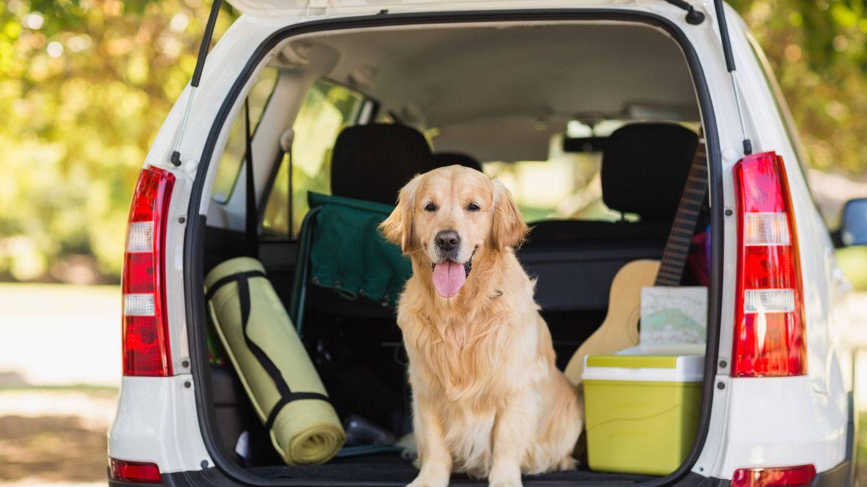 ¿Te vas de vacaciones con tu perro? Así debes llevarlo en el coche para evitar multas