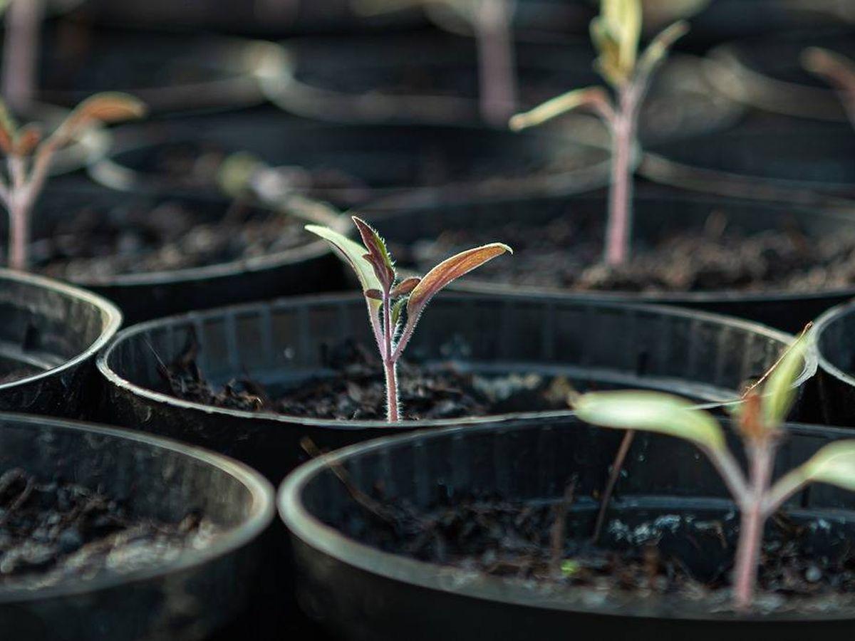Foto: Abonar bien la tierra ayudará a germinar las semillas (Foto: Pixabay)