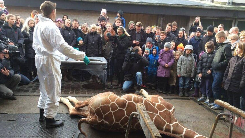 Un grupo de escolares presencia en primera fila el descuartizamiento de la jirafa.