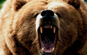 Los 'osos' siempre están al acecho: así se reparten en el capital del Ibex