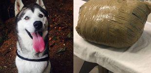 Post de Llevó a su perra a una guardería y se la devolvieron muerta y en un paquete