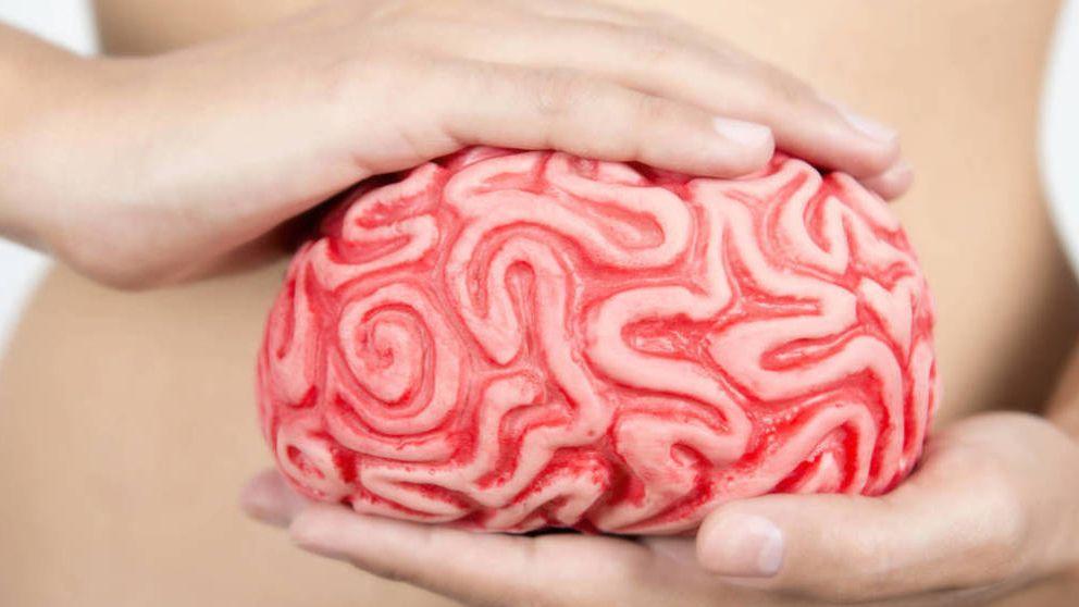 Tienes más de un cerebro y la microbiota es fundamental para él