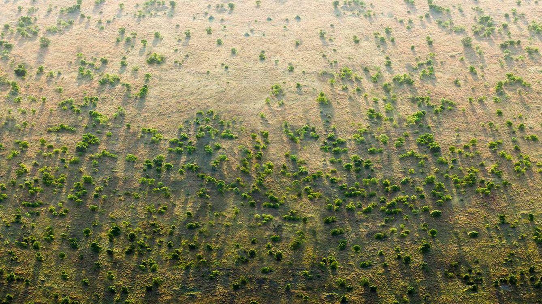 La Gran Muralla Verde africana: árboles para detener el desierto y el terrorismo islámico