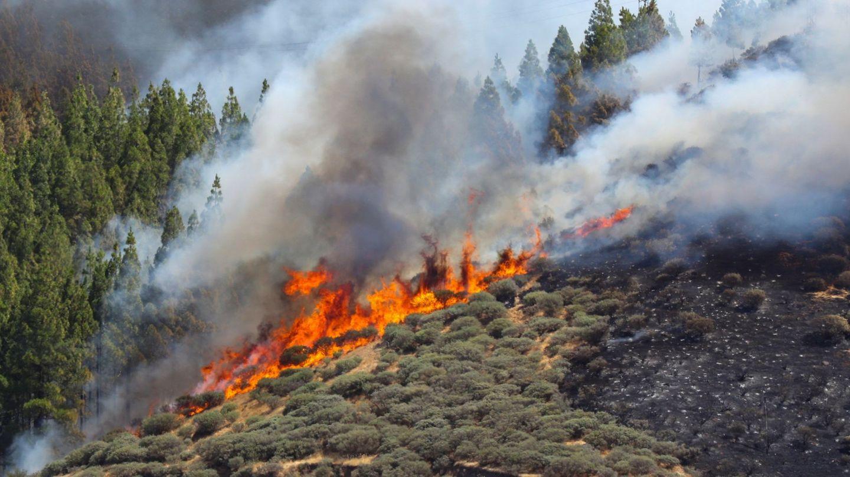Vista del incendio declarado este sábado en la zona de Artenara en el oeste de la isla de Gran Canaria. (EFE)