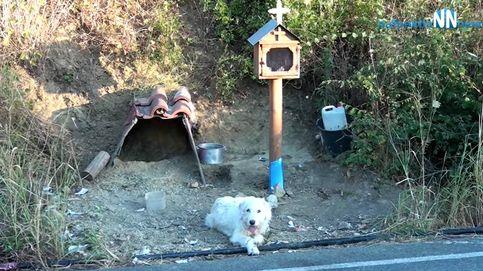Un perro lleva año y medio esperando a su dueño en la curva en la que murió
