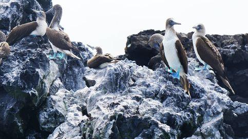 El secreto de la biodiversidad de las Galápagos, descubierto