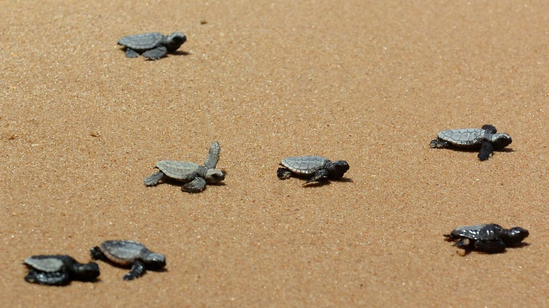 Las playas acogen una rica biodiversidad que merece nuestro respeto. (EFE)