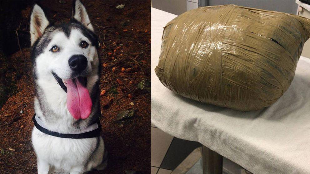 Llevó a su perra a una guardería y se la devolvieron muerta y en un paquete