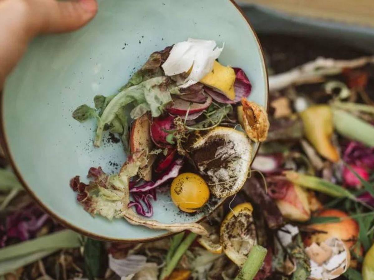 Foto: Verduras, frutas, carne... directamente a la basura.