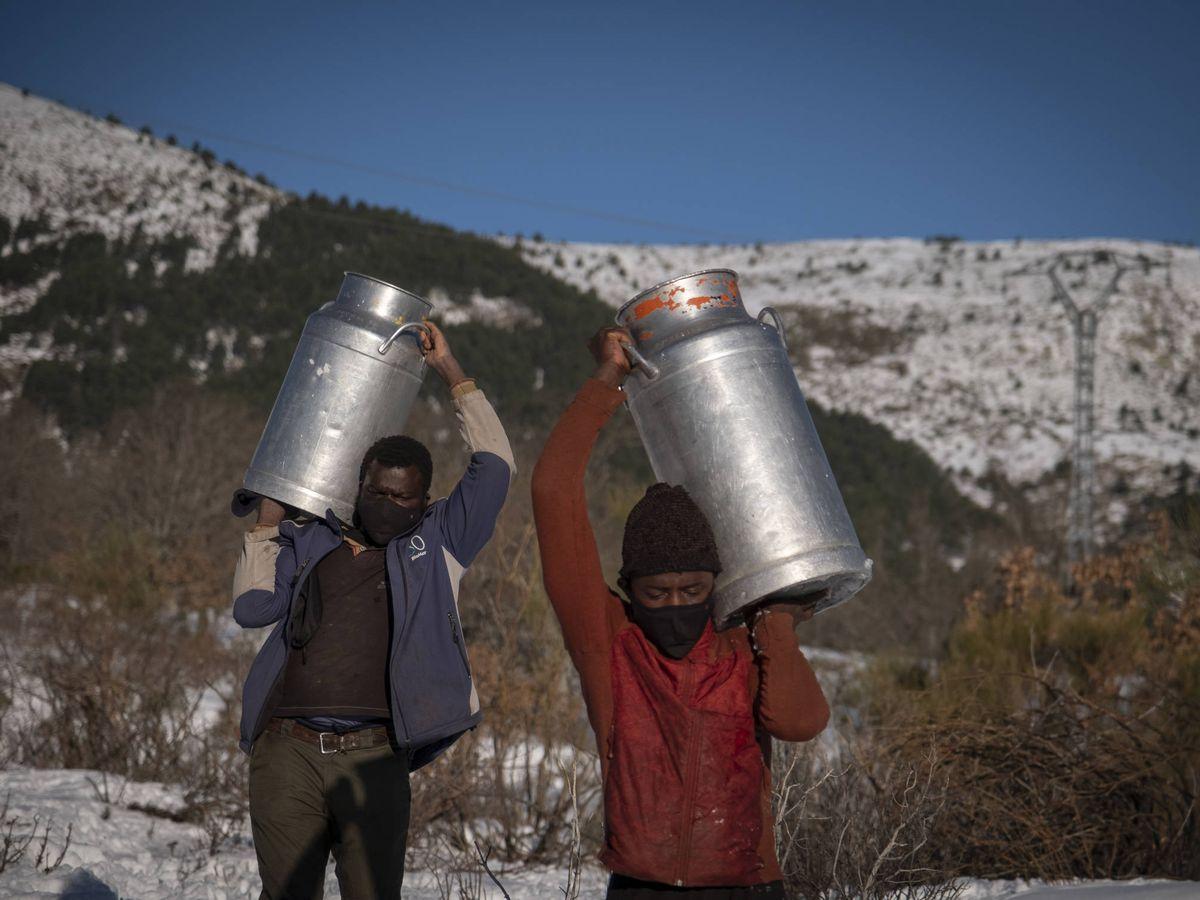 Foto: Dos ganaderos de Bustarviejo cargan la leche por los campos nevados. (Greenpeace/Pedro Armestre)