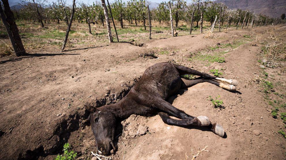 Así afectará el cambio climático a España: pobres en agua y con más enfermedades