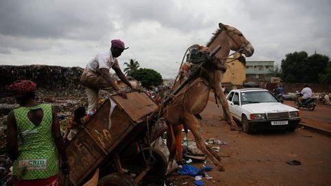 Los 'burros basureros' de Mali