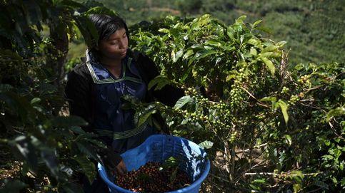 La pandemia acaba con el café: el consumo mundial cae a mínimos de una década