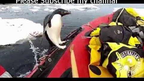 El vídeo del 'pingüino inspector' que arrasa en redes sociales