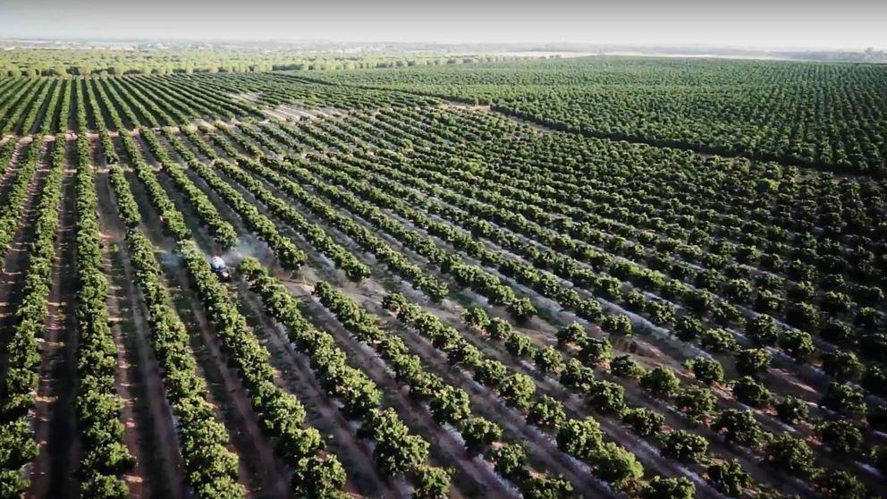 Miura y Martinavarro refinancian 210M de su gigante naranjero para salir de compras