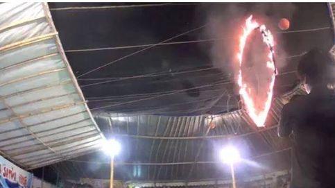 Delfines, obligados a saltar por aros de fuego: la crueldad de un circo de Indonesia