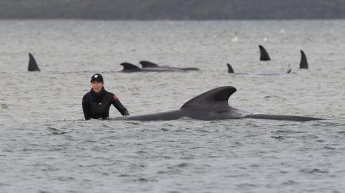 Al menos 90 ballenas mueren tras haberse quedado varadas en una playa australiana