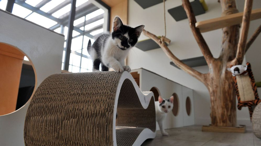 Foto: Varios gatos jugando. (EFE)