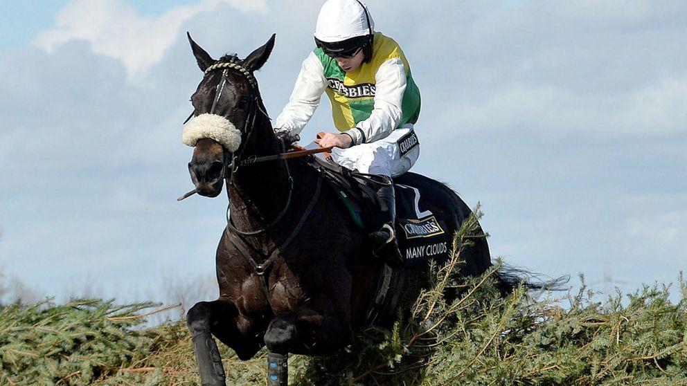 'Many Clouds', el caballo que puede hacer historia en el Grand National