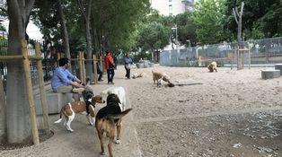 En Barcelona, hasta los perros marchan contra Colau