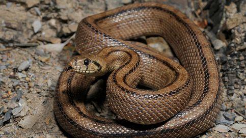 Capturan una serpiente de dos metros en el centro comercial Parque Sur de Rivas