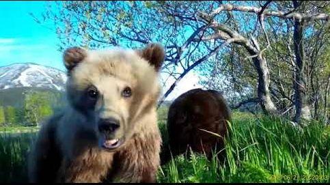 El entrañable selfie de un osezno ruso