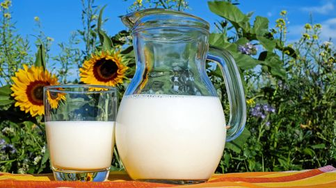 ¿Qué es más sana: leche homogeneizada o pasteurizada?