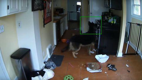 Este perro enciende los fuegos de la cocina y casi prende la casa