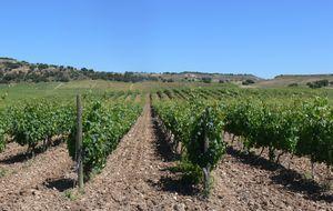 Un recorrido vino a vino por el terruño español: Vinos Iberian