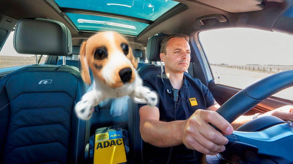 Foto: Una mascota sin sujeción saldrá disparada en caso de accidente, frenazo o volantazo, provocando un grave problema (Foto: Race/Royal Canin)