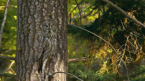 ¿Me ves o no me ves? Veinte ejemplos brillantes de camuflaje animal