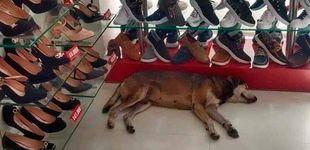 Post de El dueño de una zapatería se niega a sacar a un perro callejero de su tienda