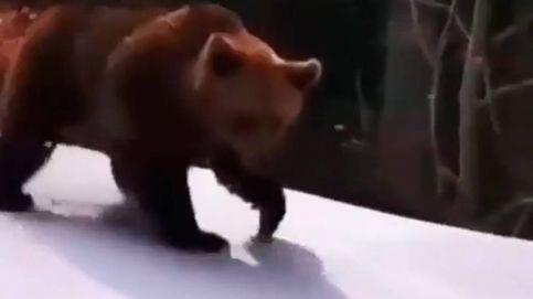 El vídeo viral de un oso persiguiendo a un instructor de esquí en Rumanía