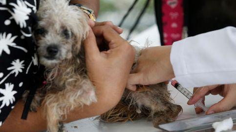 Pasarela Internacional de Perros en Bangkok