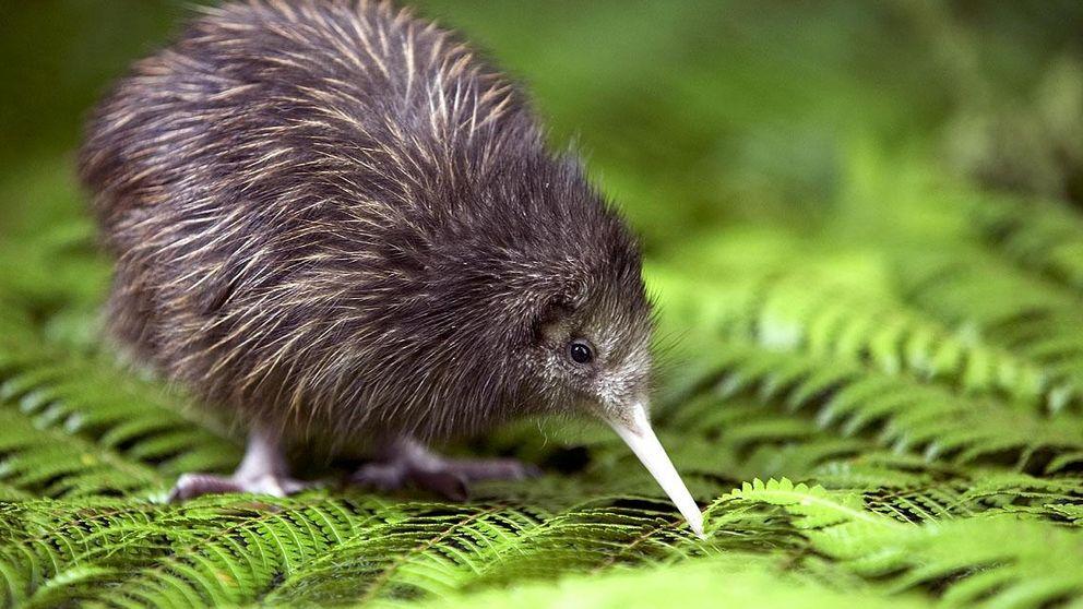 Por qué Nueva Zelanda es el perfecto conejillo de Indias de las tecnológicas