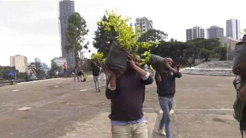 Plantan 350 millones de árboles en 12 horas