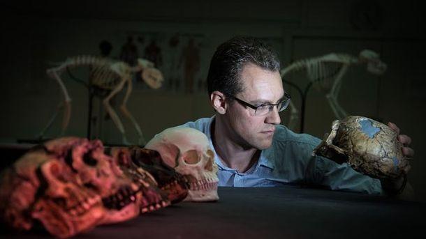 Foto: El biólogo evolutivo Alistair Evans, líder del estudio, examina una serie de moldes de cráneo de homínidos que se incluyeron en el trabajo / David Hocking