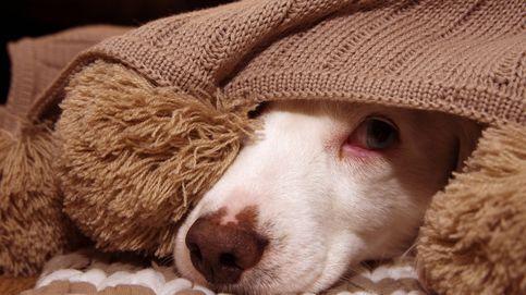 Cómo tranquilizar a tu perro en casa cuando hay fuegos artificiales